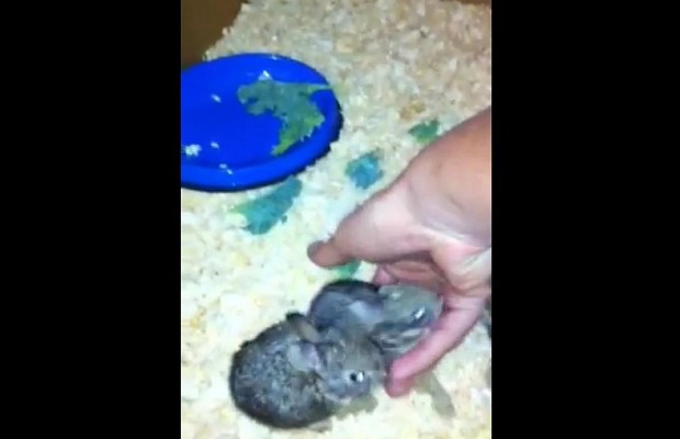 Marine Rescues Four Baby Bunnies and Our Hearts