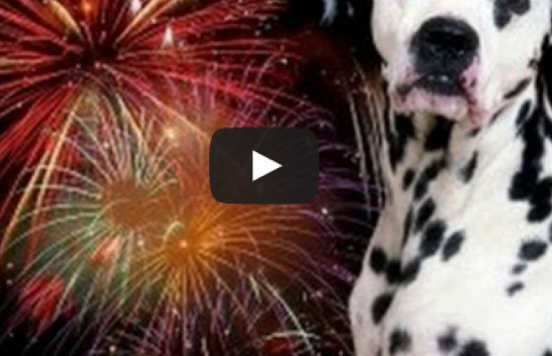 Dogs & Fireworks Don't Mix