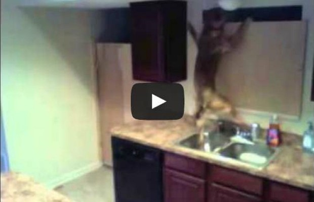 Dog's Amazing Escape