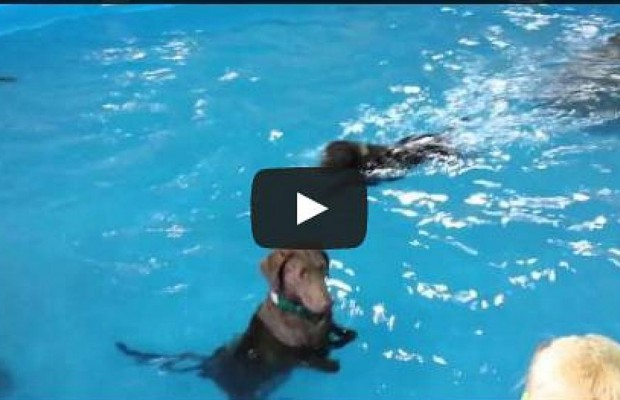 Dog Confused By Swimming
